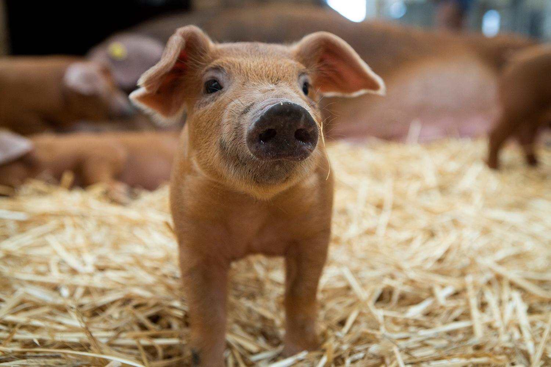 Spring Farm Fair Animal Nursery
